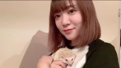 Ayasa Itous Pet Hedgehog