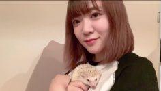 Ayasa Itous Pet Hedgehog