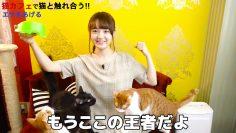 [Eng Sub] Hibiki Style Ep 379 – Ozaki Yuka visits a Cat Cafe!