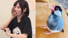 [Eng Sub] Yukkii imitates her pet bird Chunchun